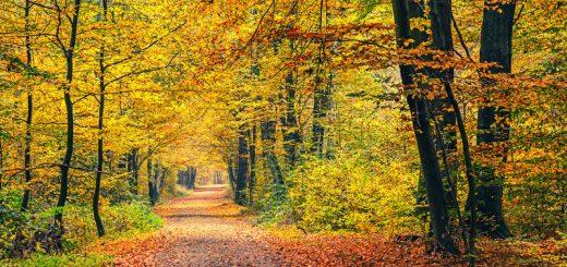 Herbstwald - innere Repräsentation