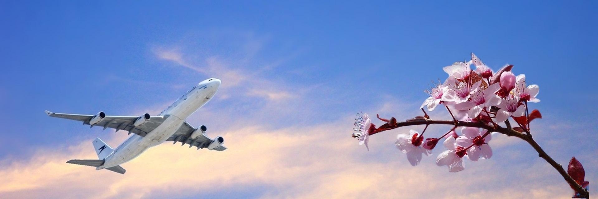 Horizonterweiterung - abhebendes Flugzeug mit Blume